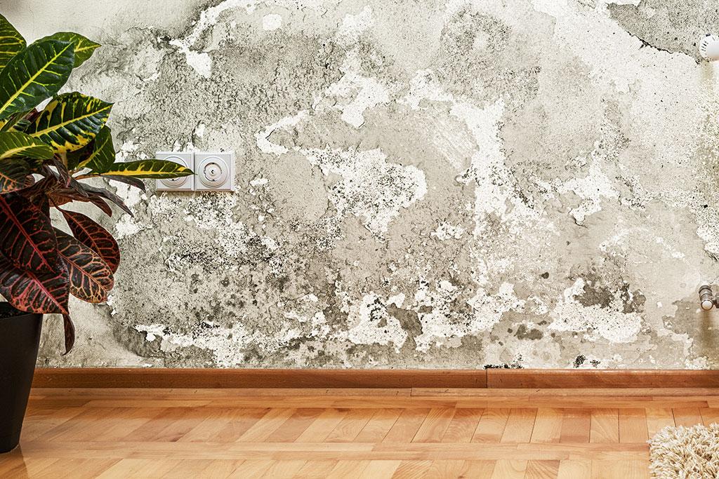 mould asbestos removal toronto